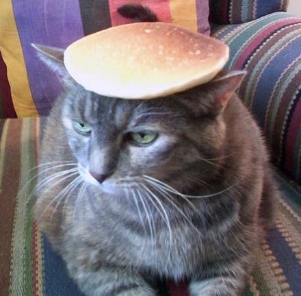 pancake-cat